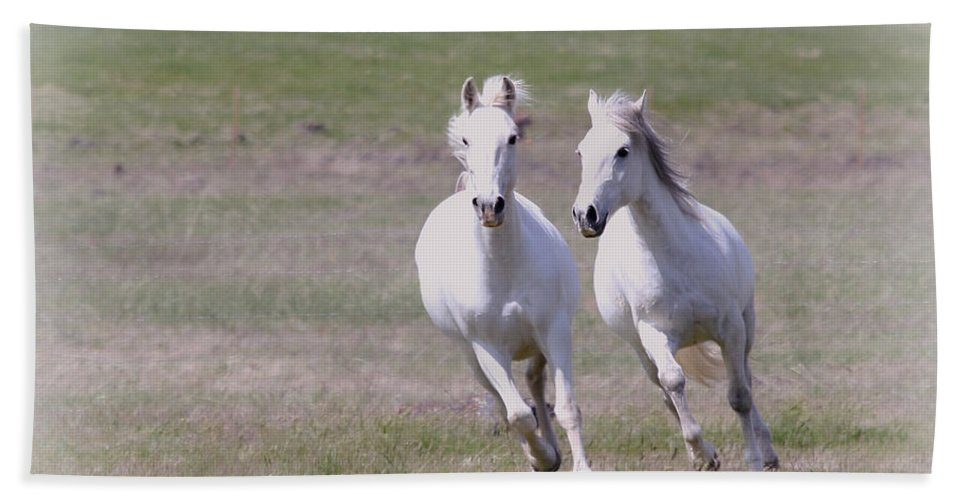 Horses Hand Towel featuring the photograph Lipizzaner Stallions by Athena Mckinzie