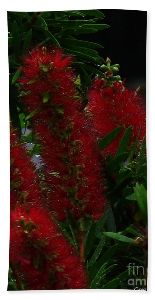 Patzer Bath Towel featuring the photograph Bottle Brush by Greg Patzer