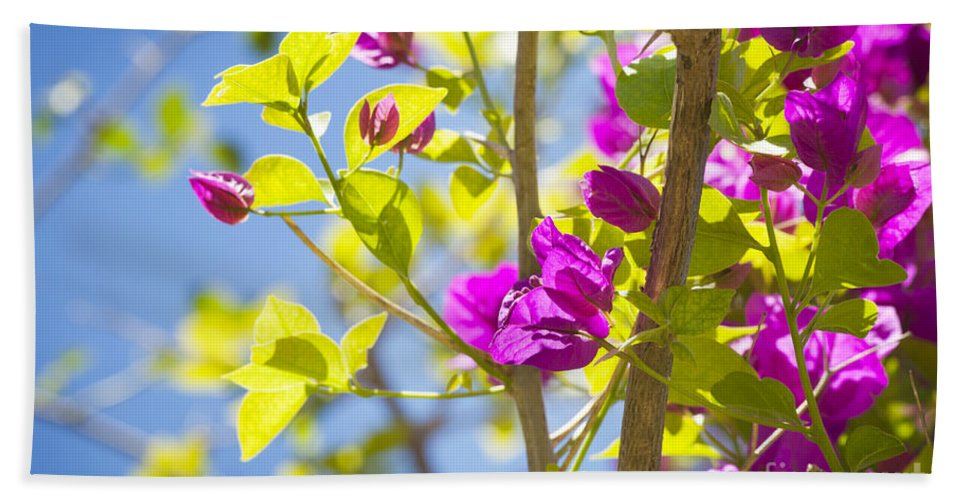 Tropical Bath Sheet featuring the photograph Bougainvillea by Tim Hester