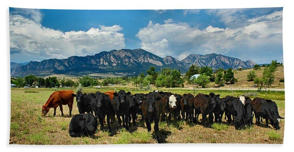 Co Bath Sheet featuring the photograph Boulder Beef by Lynn Bauer