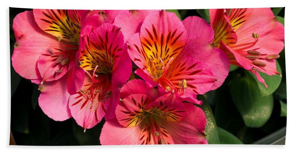 Agriculture Hand Towel featuring the photograph Bouquet Of Pink Lily Flowers by John Trax