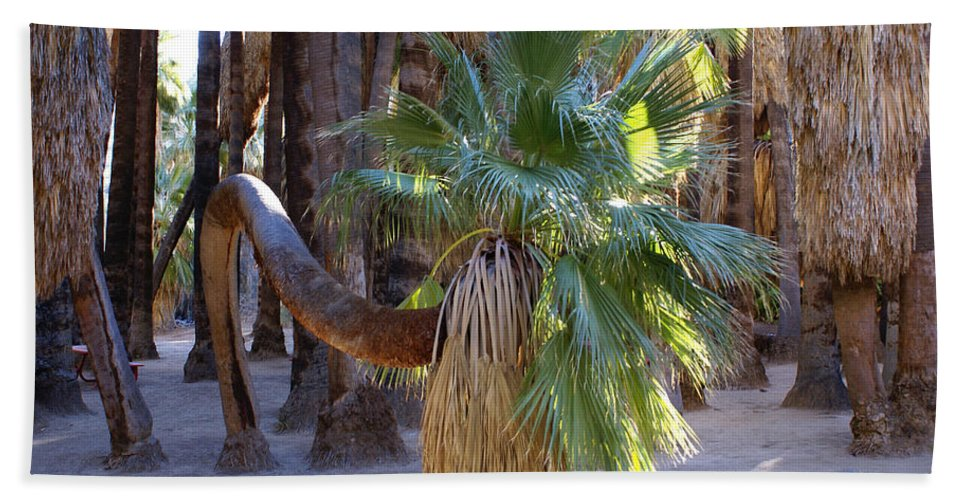 Bowing Palm Tree Hand Towel featuring the digital art Bowing Palm by Barbara Snyder