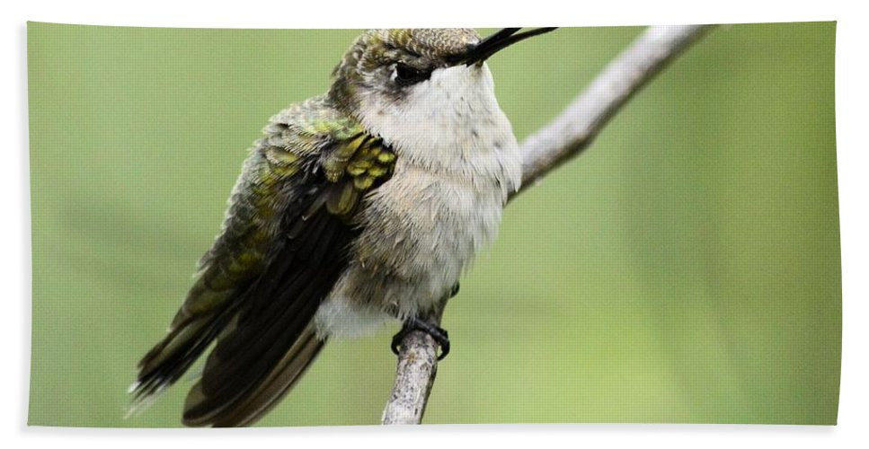 Hummingbird Hand Towel featuring the photograph Boy Am I Tired by Bonfire Photography
