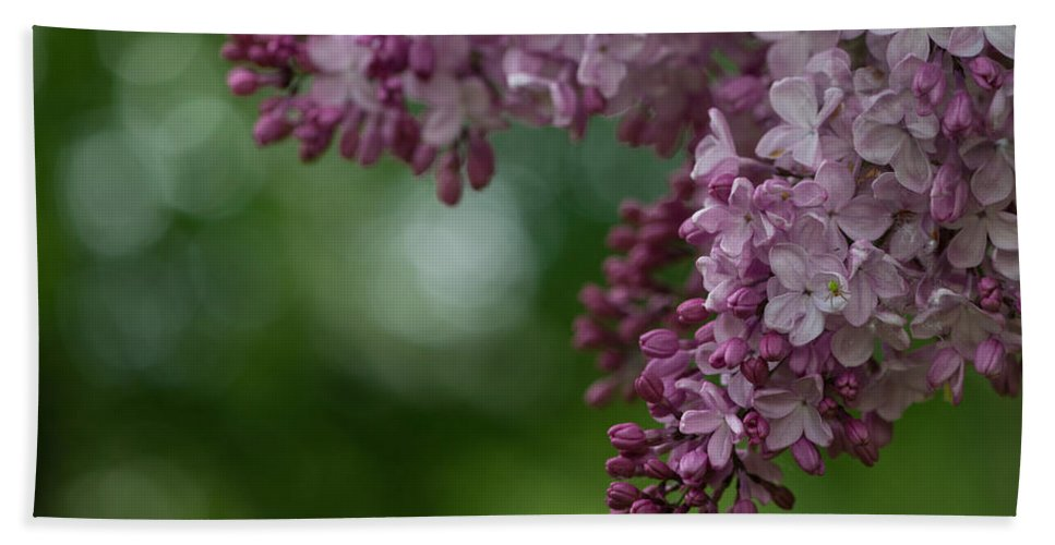 Background Bath Sheet featuring the photograph Branch With Spring Lilac Flowers by TouTouke A Y
