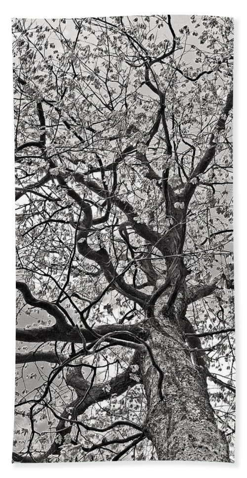 Tree Hand Towel featuring the photograph Branches by Laura Mace Rand