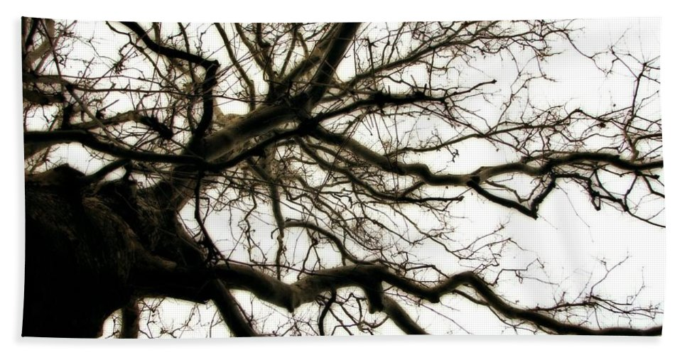 Branches Hand Towel featuring the photograph Branches by Michelle Calkins
