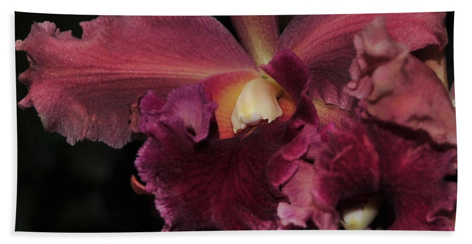 Orchid Bath Towel featuring the photograph Brassolaeliocattleya Helen Huntington Chevy Chase by Terri Winkler