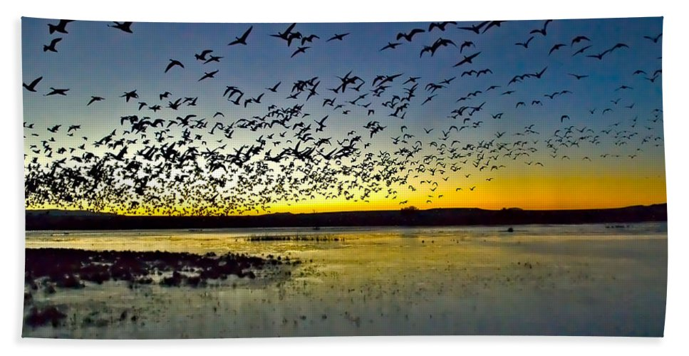Breakfast Time At Bosque Del Apache Hand Towel featuring the photograph Breadfast Time by Mae Wertz