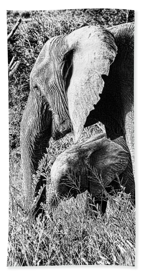 Elephant Bull Bath Sheet featuring the photograph Breakfast With Mother Black And White by Douglas Barnard