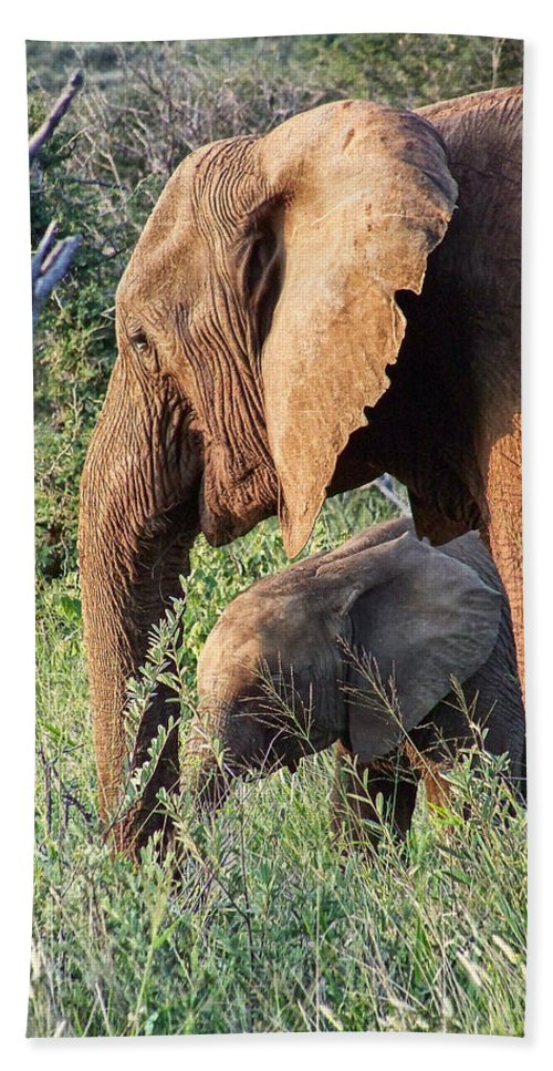Elephant Bull Hand Towel featuring the photograph Breakfast With Mother by Douglas Barnard