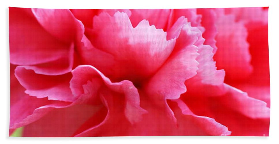 Carnation Bath Sheet featuring the photograph Bright Carnation by Carol Lynch