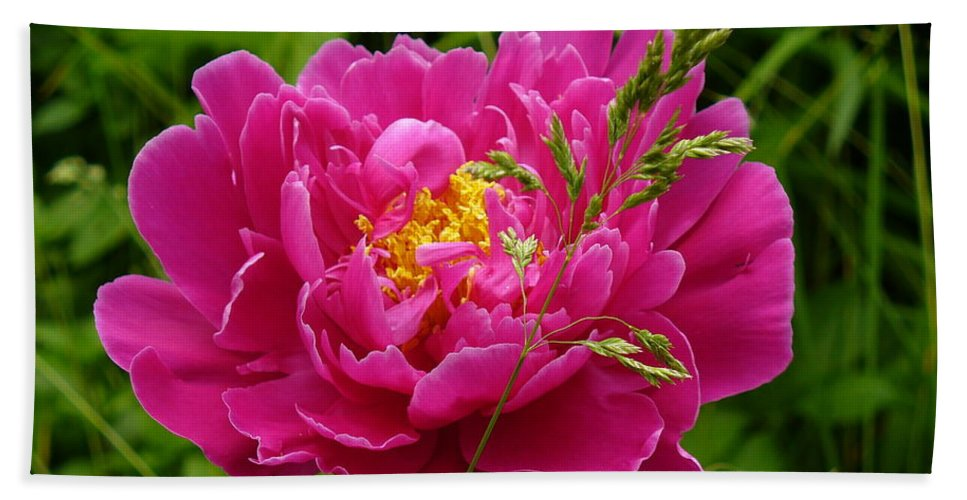 Flower Macro Bath Sheet featuring the photograph Bright Pink Blossoms by Lingfai Leung