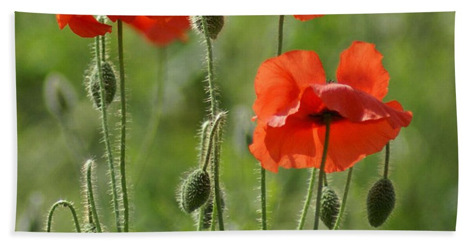 Poppies Hand Towel featuring the photograph Bright Poppies 1 by Carol Lynch