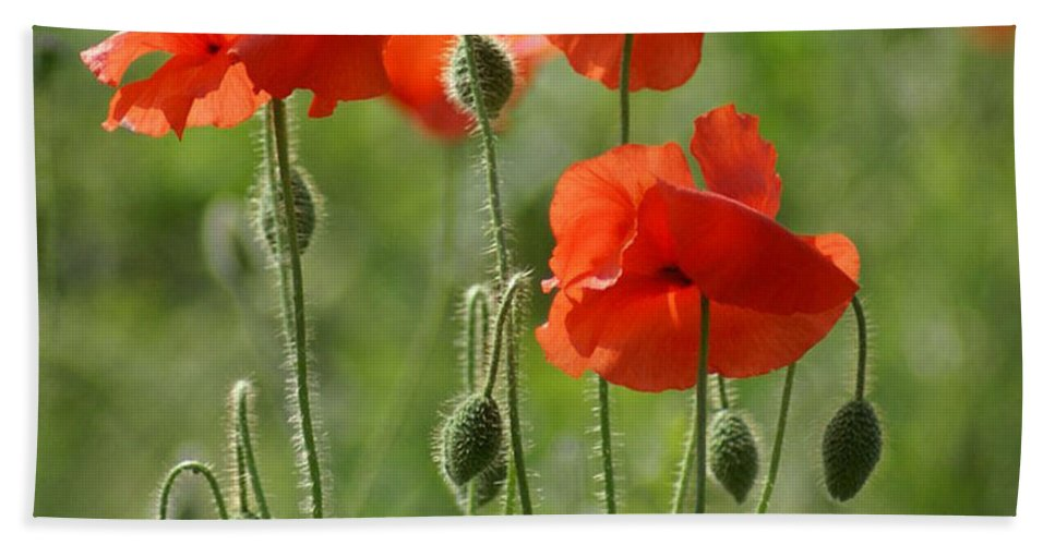 Poppies Hand Towel featuring the photograph Bright Poppies 2 by Carol Lynch