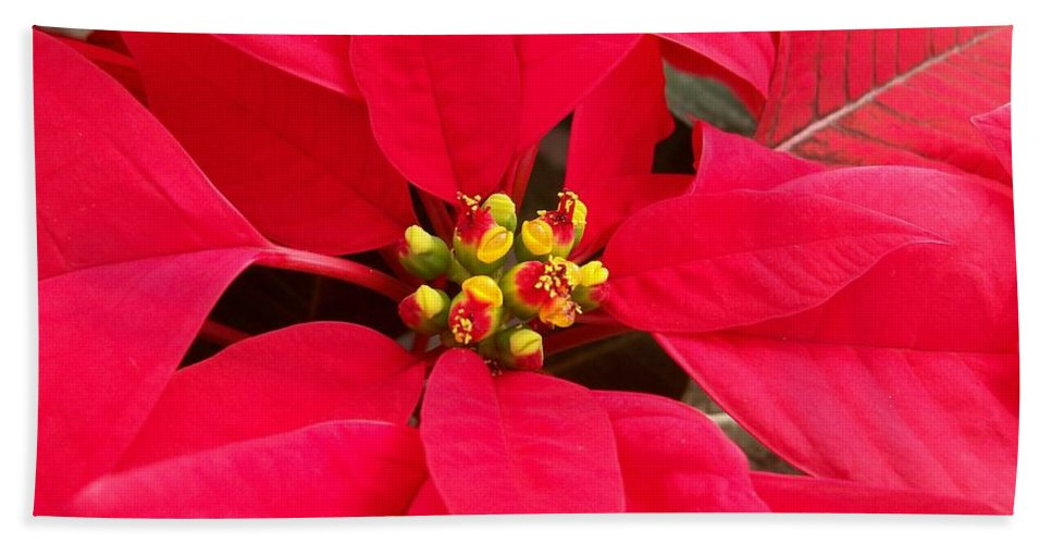 Poinsettia Bath Sheet featuring the photograph Brightest Red Poinsettia by Laurie Eve Loftin