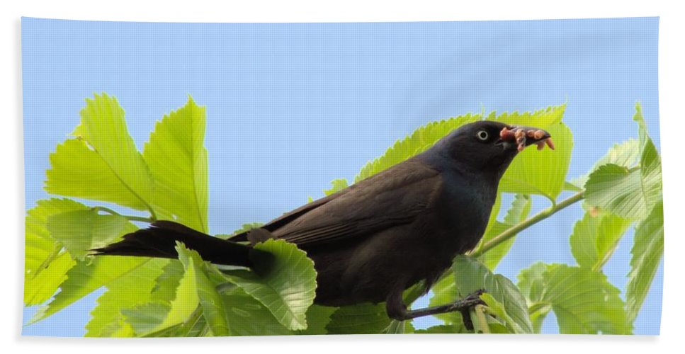 Grackle Hand Towel featuring the photograph Bringing Home Dinner by Bonfire Photography
