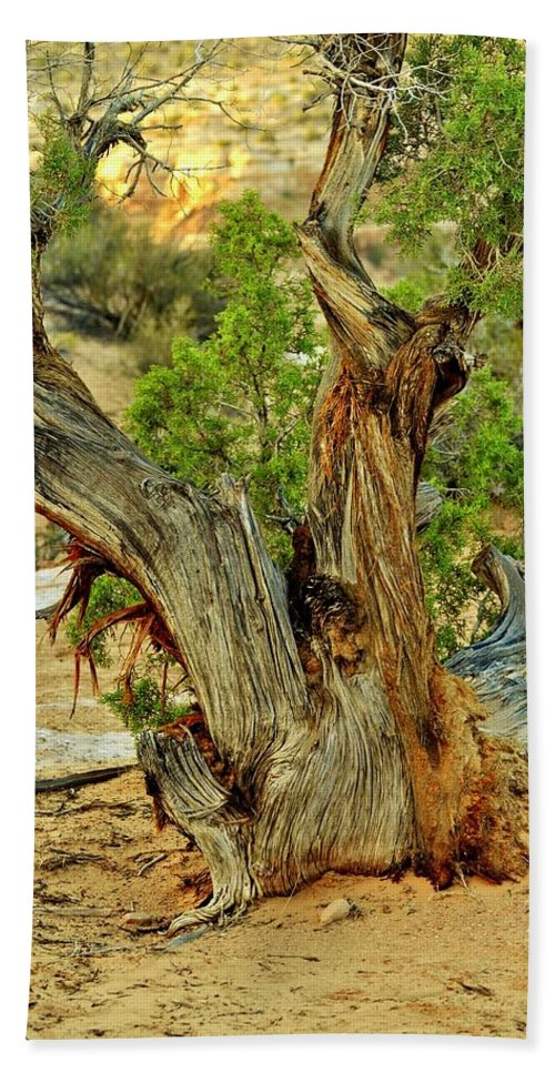 Canyonlands National Park Bath Sheet featuring the photograph Bristlecone 1 by Marty Koch