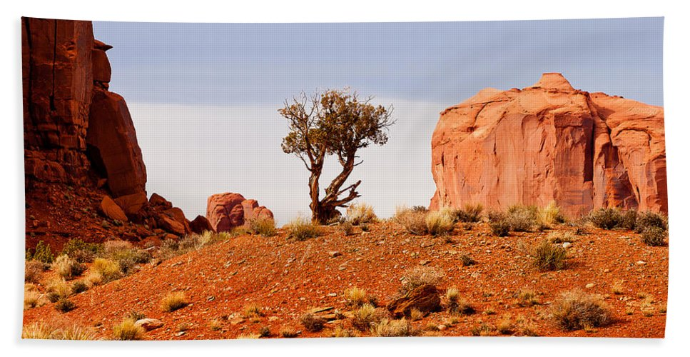 Monument Valley Hand Towel featuring the photograph Bristlecone Pine by Peter Tellone