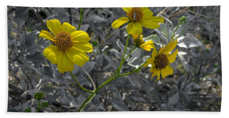 White Tanks Hand Towel featuring the photograph Brittlebush Flowers by Laurel Powell