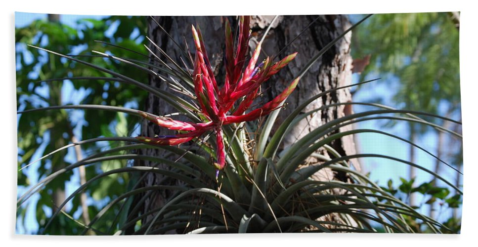 Rare Hand Towel featuring the photograph Bromeliaceous by Robert Floyd