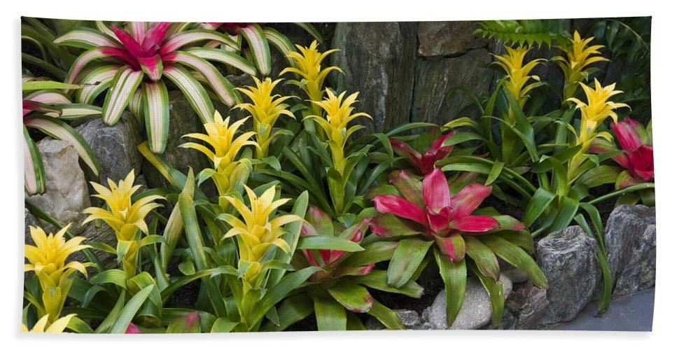 Guzmania Ligulata Bromeliad Tropical Plants Bath Sheet featuring the photograph Bromeliads by Sally Weigand
