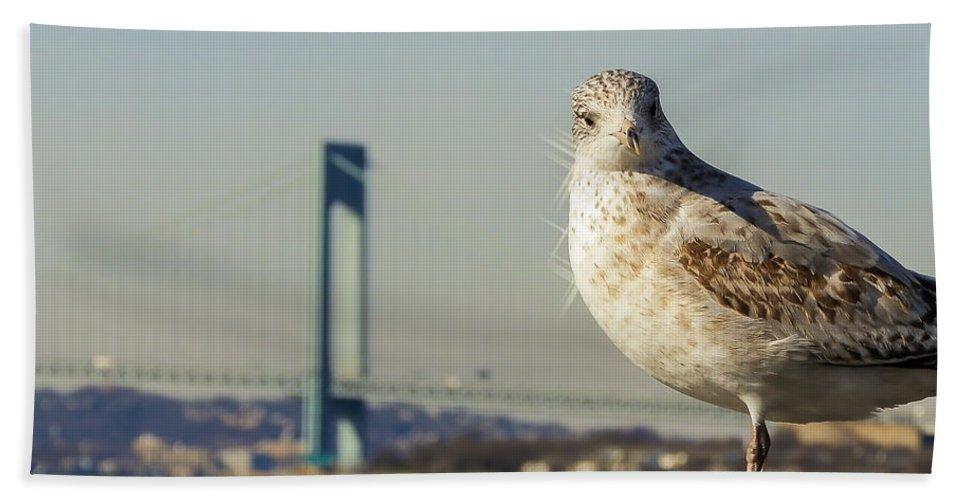 Coney Island Hand Towel featuring the photograph Brooklyn Seagull by Jon Woodhams