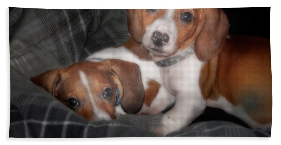 Dog Bath Sheet featuring the photograph Brothers by David and Carol Kelly