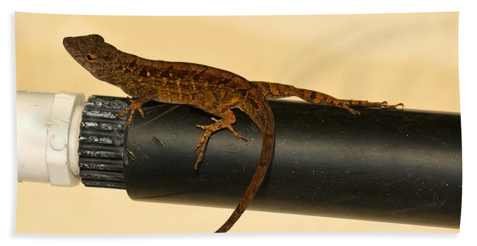 Florida Hand Towel featuring the photograph Brown Anole On Pipe by Richard Bryce and Family