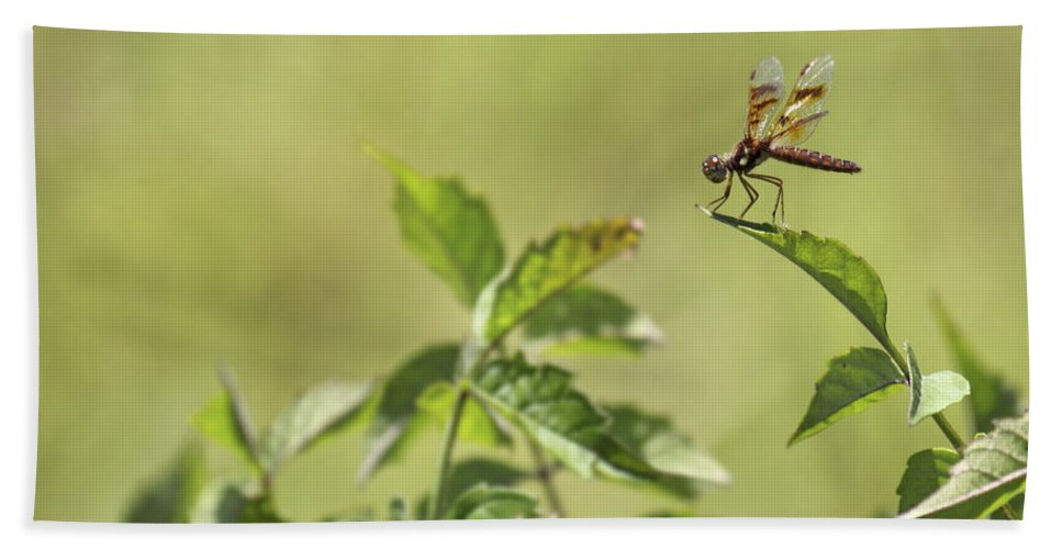 Dragonfly Hand Towel featuring the photograph Brown Hawker Dragonfly by Jason Politte