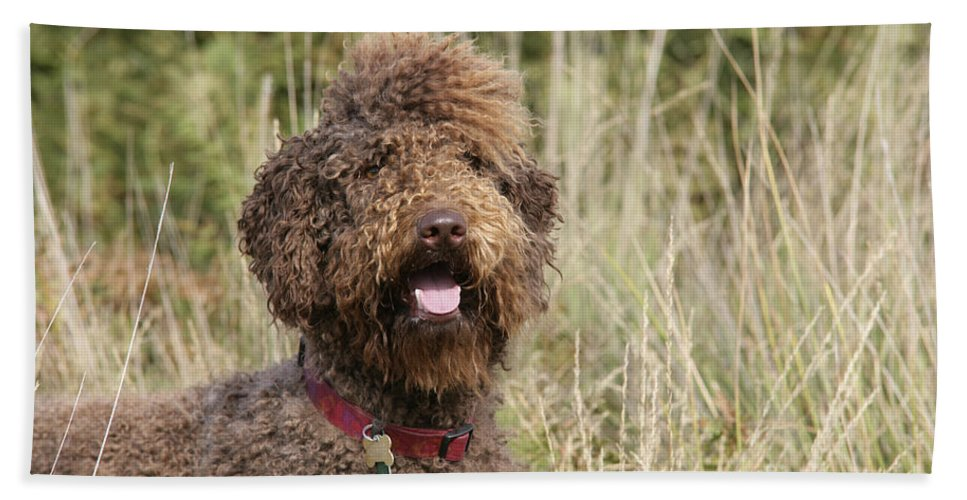 Labradoodle Bath Sheet featuring the photograph Brown Labradoodle In Field by John Daniels