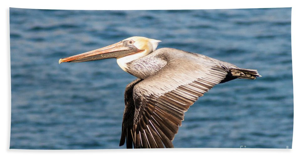 Brown Bath Sheet featuring the photograph Brown Pelican Flying by Darleen Stry