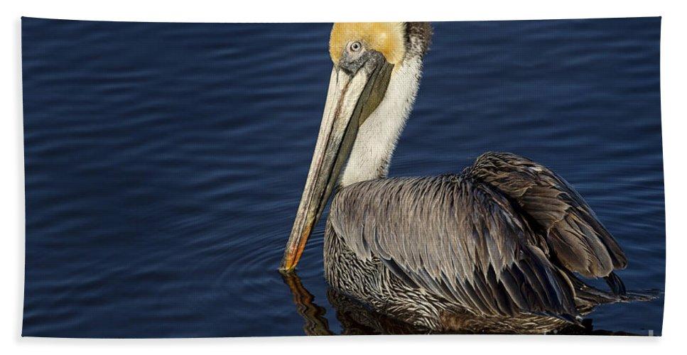 Bath Sheet featuring the photograph Brown Pelican by Maria Struss