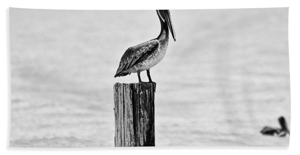Pelican Bath Sheet featuring the photograph Brown Pelican - Bw by Scott Pellegrin