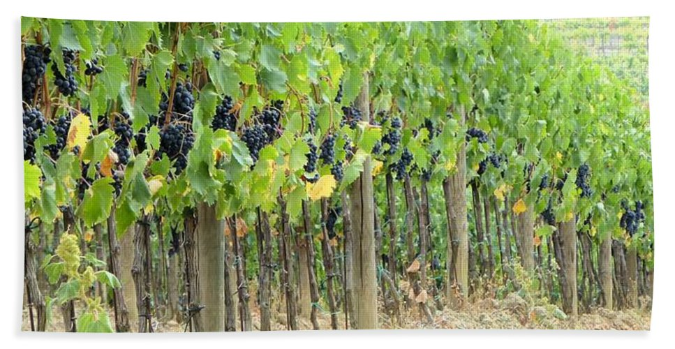 Nature Hand Towel featuring the photograph Brunello Grape Vineyard by Richard Rutan
