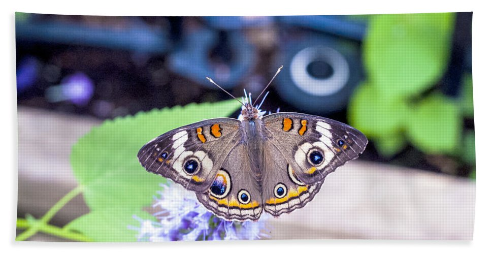 Colorful Bath Sheet featuring the photograph Buckeye I by Pablo Rosales
