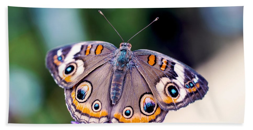 Colorful Bath Sheet featuring the photograph Buckeye II by Pablo Rosales