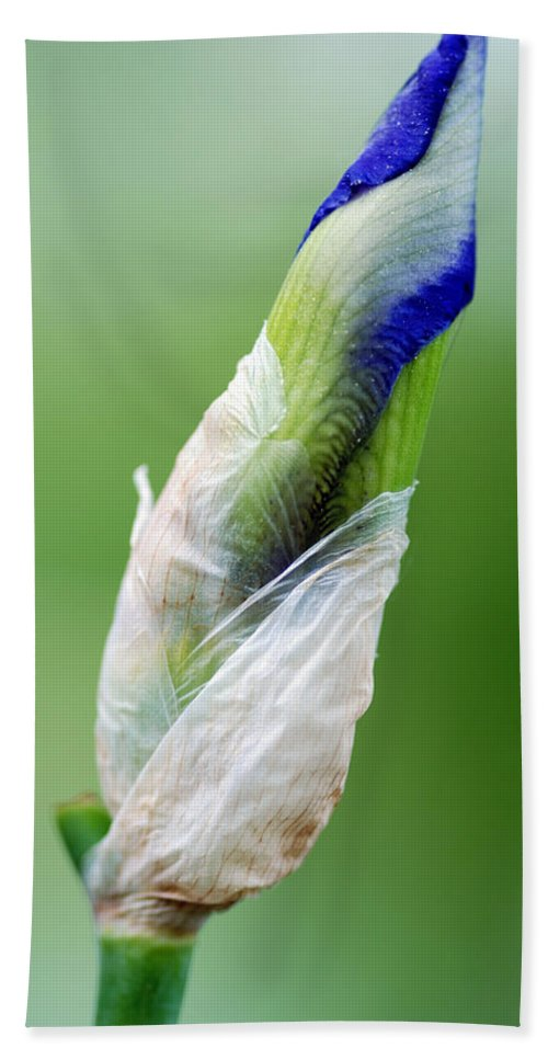 Budding Blue Wildflower Flower Blue White Flower Buds Green Flower Stem Nature Hand Towel featuring the photograph Budding Blue by Optical Playground By MP Ray