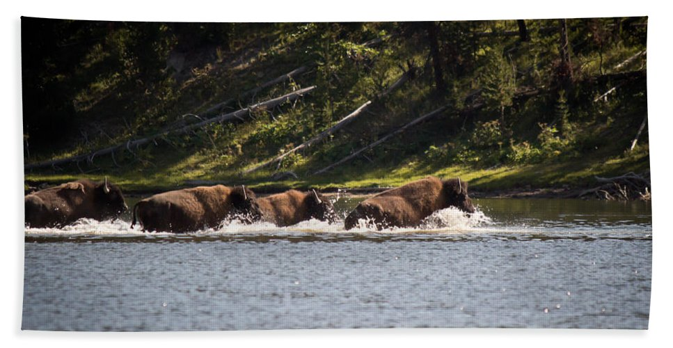 Buffalo Hand Towel featuring the photograph Buffalo Crossing - Yellowstone National Park - Wyoming by Diane Mintle