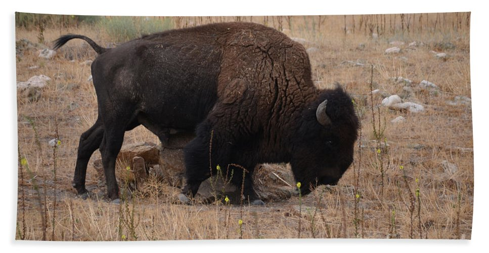 Buffalo Hand Towel featuring the photograph Buffalo Of Antelope Island Iv by Donna Greene