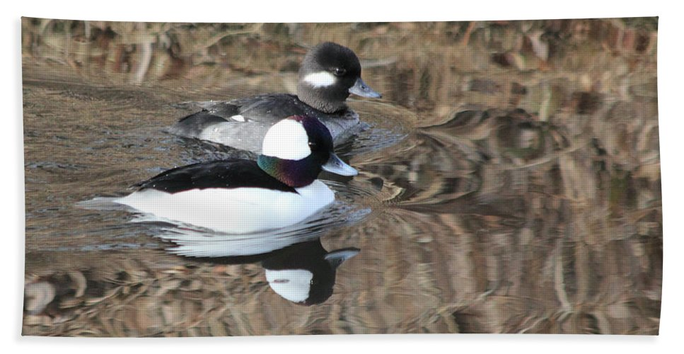 Ducks Hand Towel featuring the photograph Bufflehead Pair by Shane Bechler
