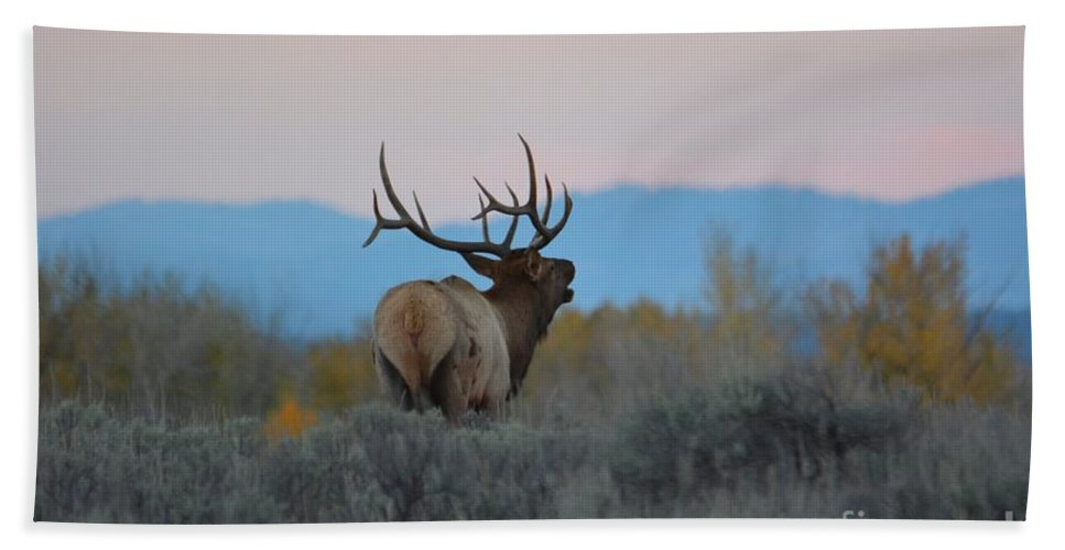 Elk Bath Sheet featuring the photograph Bugle At Dusk by Deanna Cagle