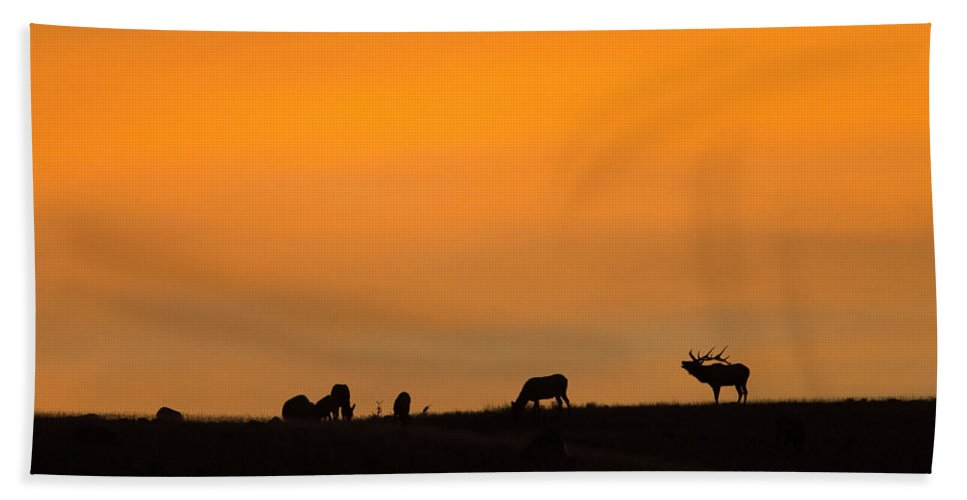 Elk Bath Sheet featuring the photograph Bugling Autumn Elk by Max Waugh