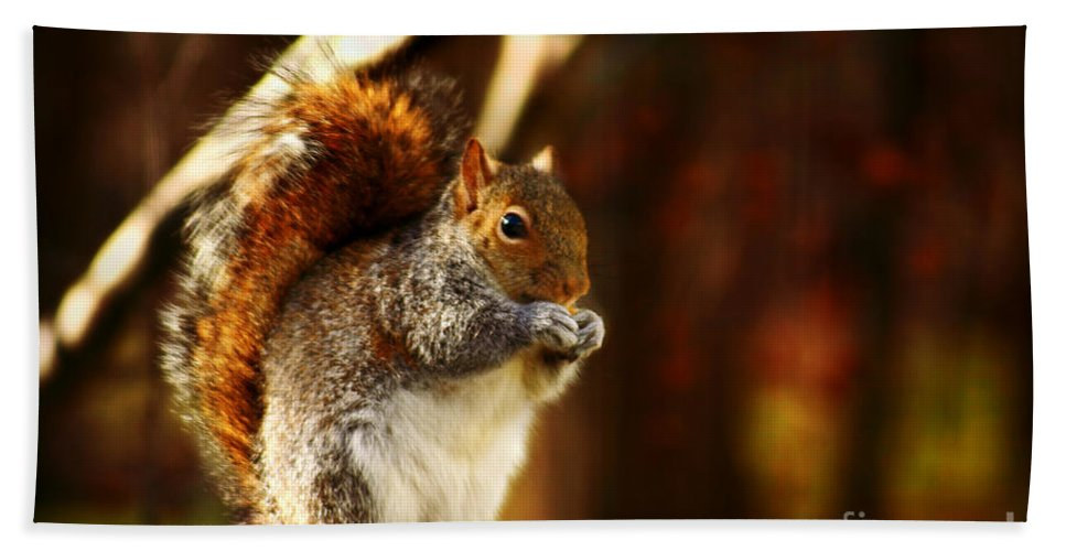 Gray Squirrel Bath Sheet featuring the photograph Bulking Up For Winter by Beth Ferris Sale