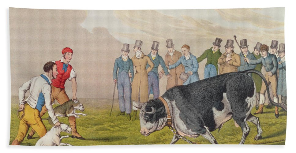 Alken Hand Towel featuring the painting Bull Baiting by Henry Thomas Alken