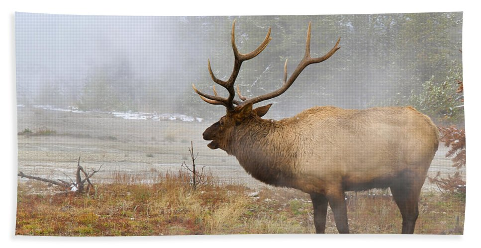 National Park Bath Sheet featuring the photograph Bull Elk Bugles Loves In The Air by Ed Riche