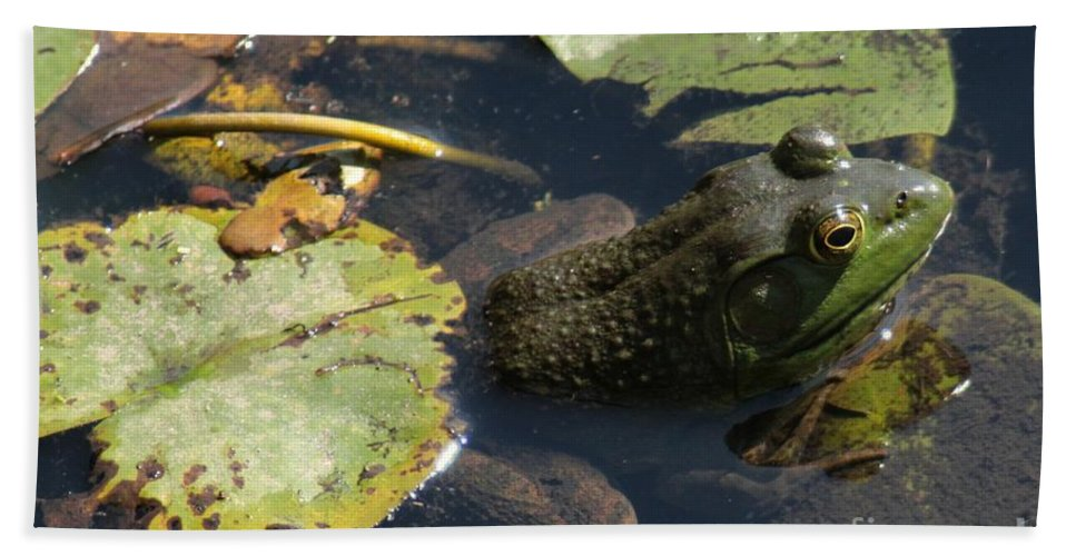 Frog Hand Towel featuring the photograph Bull Frog by Kenny Glotfelty