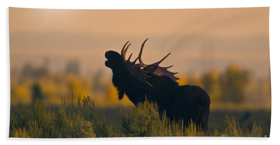 Alces Alces Hand Towel featuring the photograph Bull Moose Grunting by Anthony Mercieca