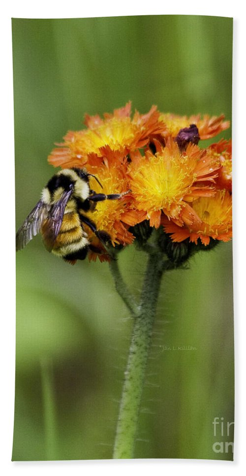 Bumblebee Hand Towel featuring the photograph Bumble And Hawk by Jan Killian