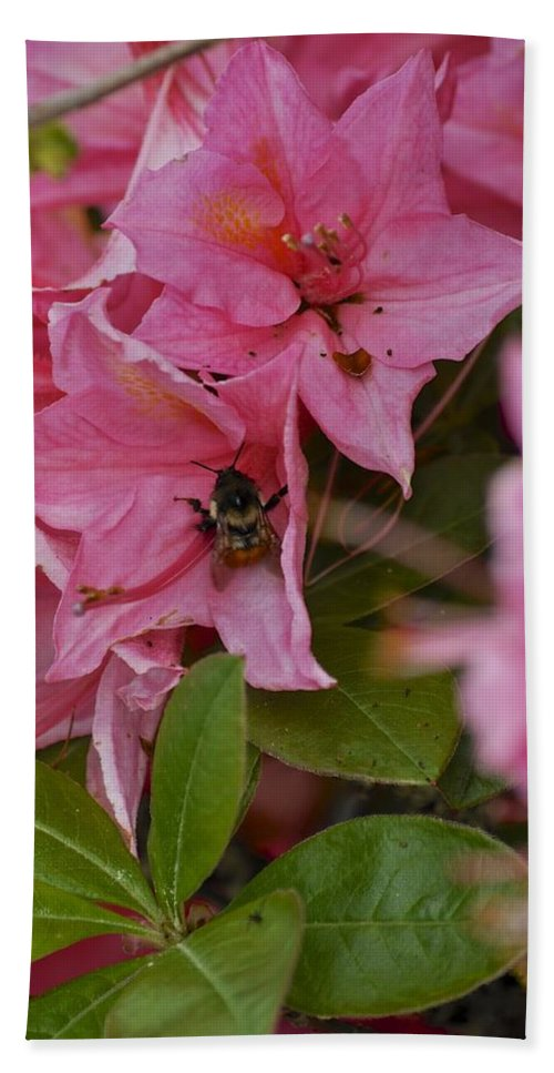 Pink Hand Towel featuring the photograph Bumblebee In Pink by Cathy Mahnke