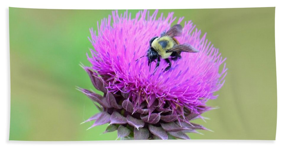Bumblebee On Thistle Bath Sheet featuring the photograph Bumblebee On Thistle 2013 by Maria Urso